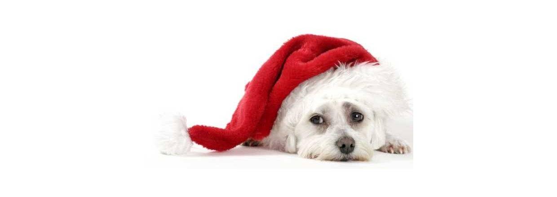 Julelukket